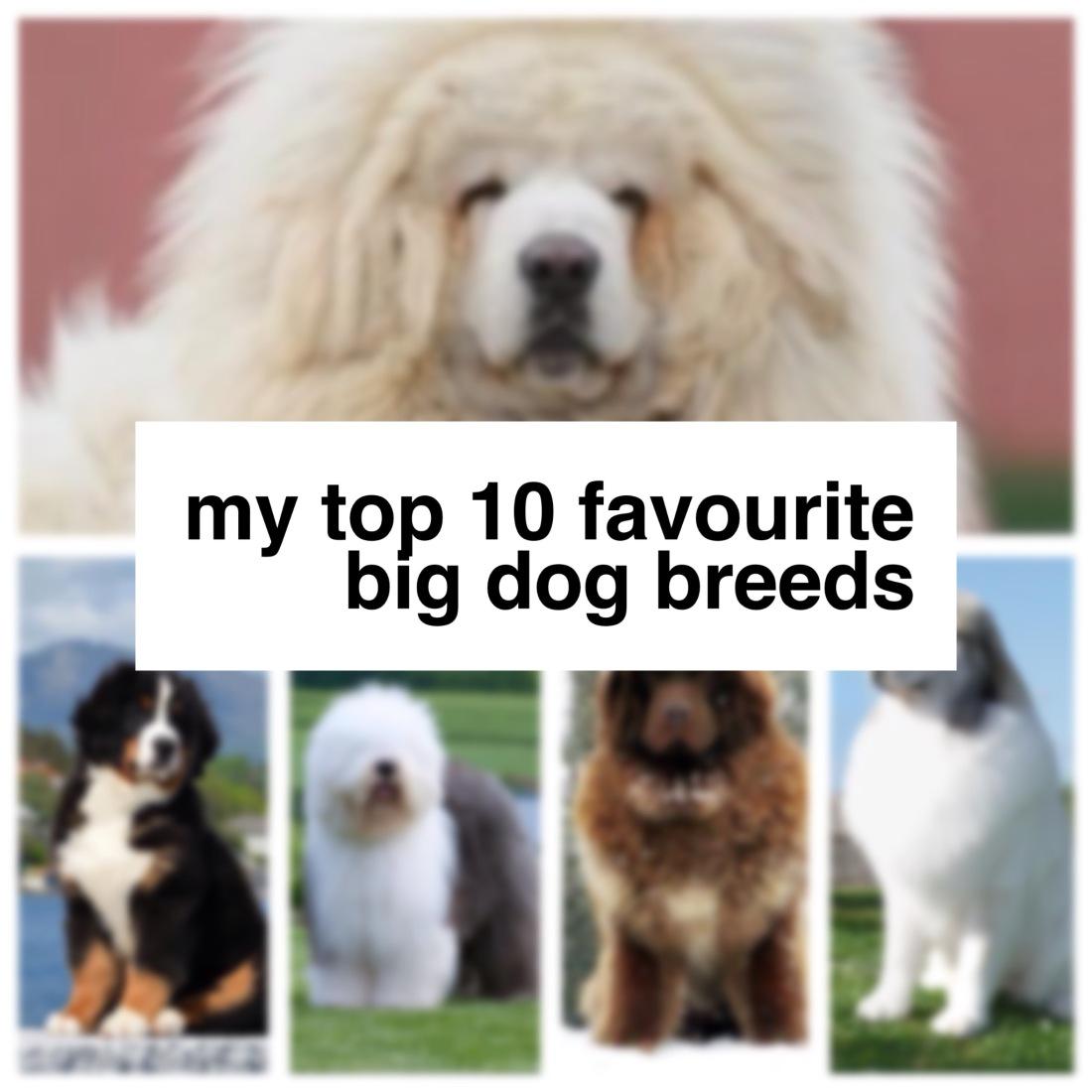 top_10_big_dog_breeds